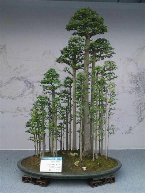 Bonsai Wald Kaufen 4947 bonsai wald kaufen bonsai wald wacholder juniperus