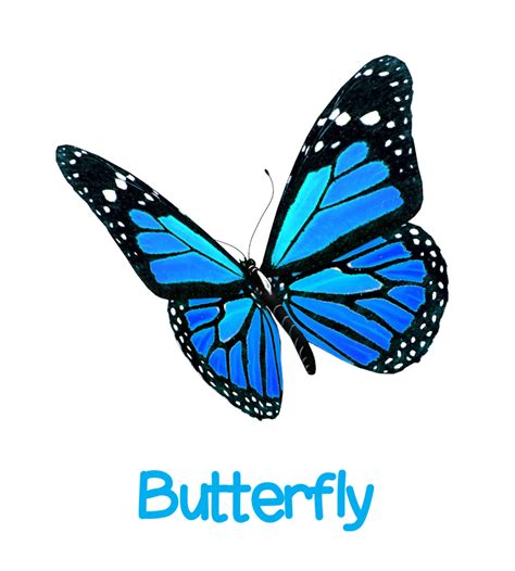 the butterfly bumpkins day nursery introducing our butterfly room bumpkins