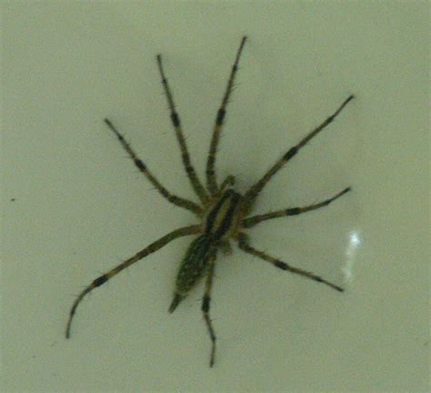 sw spider house sw spider house 28 images spiders at spiderzrule the best site in the world about