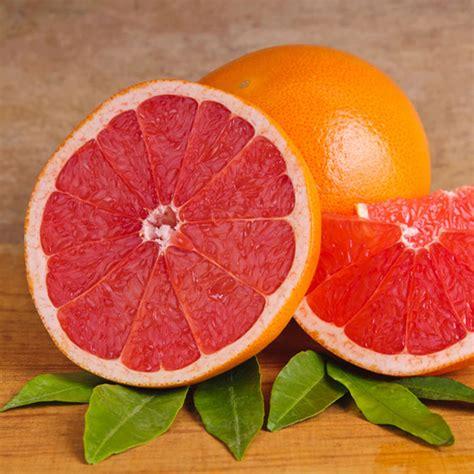 grapefruit color pink grapefruit www pixshark images galleries with