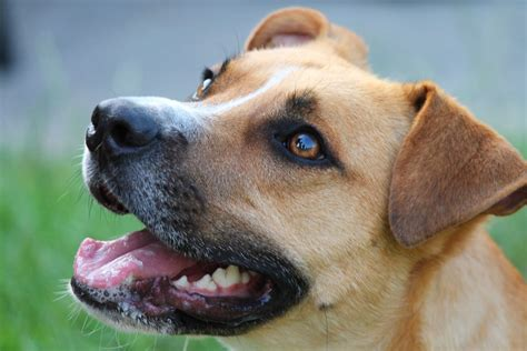 sepsis in dogs symptoms of staph infection in dogs canna pet 174
