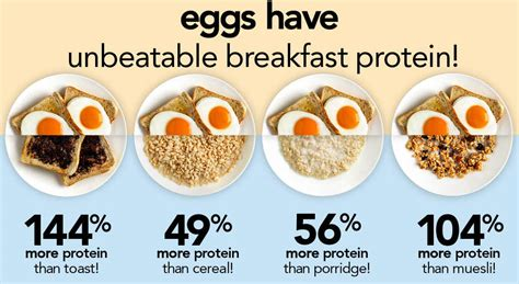protein 1 egg the best breakfast protein i eggs