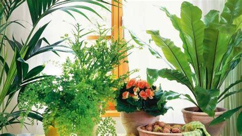 15 popular indoor plants for tropics eva furniture top 3 trends for indoor plants stuff co nz