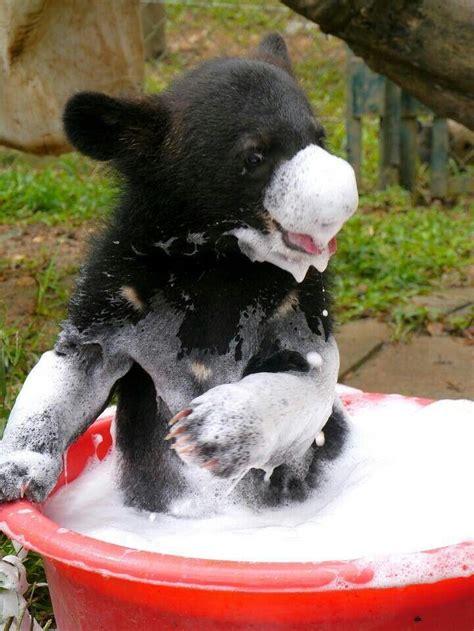 bear in a bathtub baby bear taking a bath animals pinterest