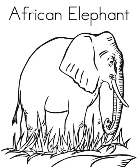 coloring page african animals africa coloring page coloring home