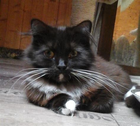 tiere suchen ein zuhause de tiere suchen ein zuhause katzen