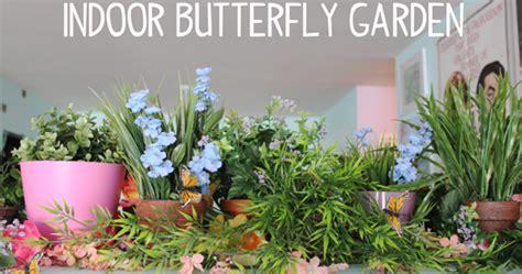 indoor butterfly garden uk scathingly brilliant here s an idea indoor butterfly garden