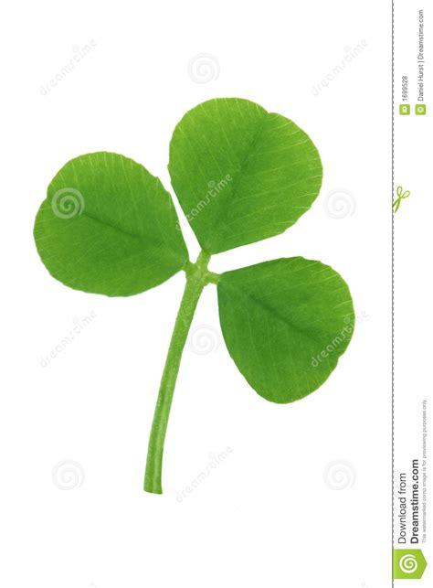 three leaf clover royalty free stock photos image 1699528