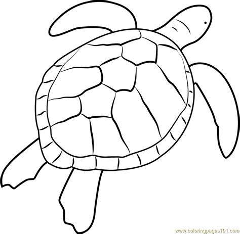 Coloring Page Sea Turtle by Green Sea Turtle Coloring Page Free Turtle Coloring