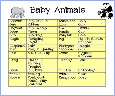 Name The Baby Animal Baby Shower by Baby Shower Baby Animals Baby Shower Ideas