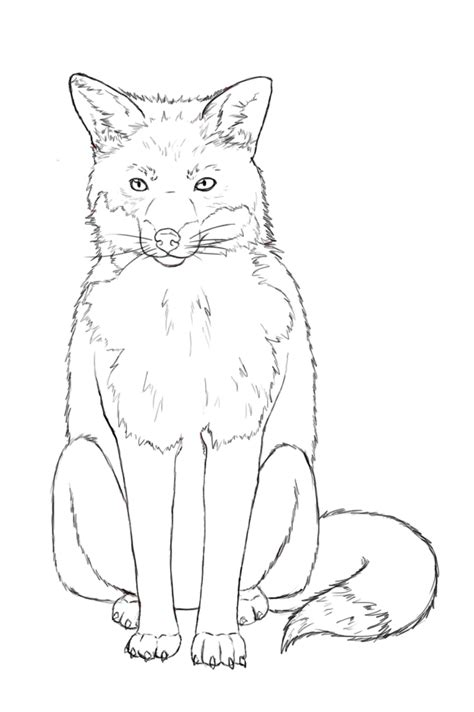Fox Drawing Outline by How To Draw A Fox Draw Central