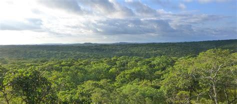 amazon zambia stand for trees lower zambezi community forest project