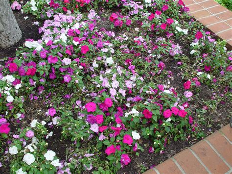 shade annuals for michigan dirt simple