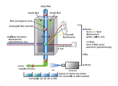 flow cytometry diagram flow cytometry diagram immunofluorescence assay diagram
