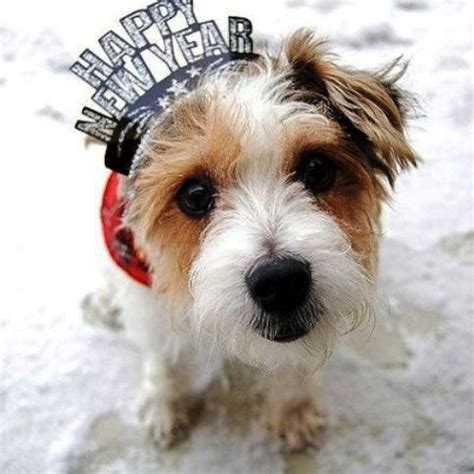 new year for dogs happy 2013 new year animal holidays