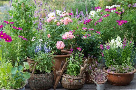a cottage garden in pots - Cottage Garden Pots
