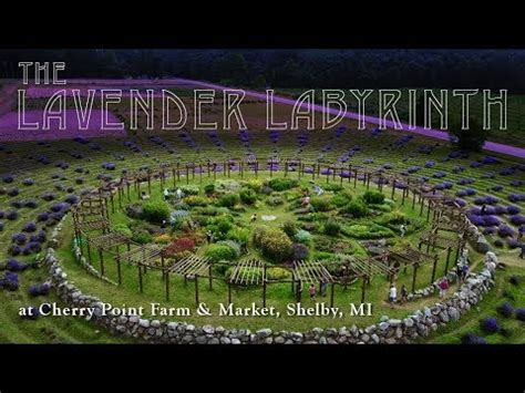 cherry point farm shelby mi the lavender labyrinth cherry point farm market