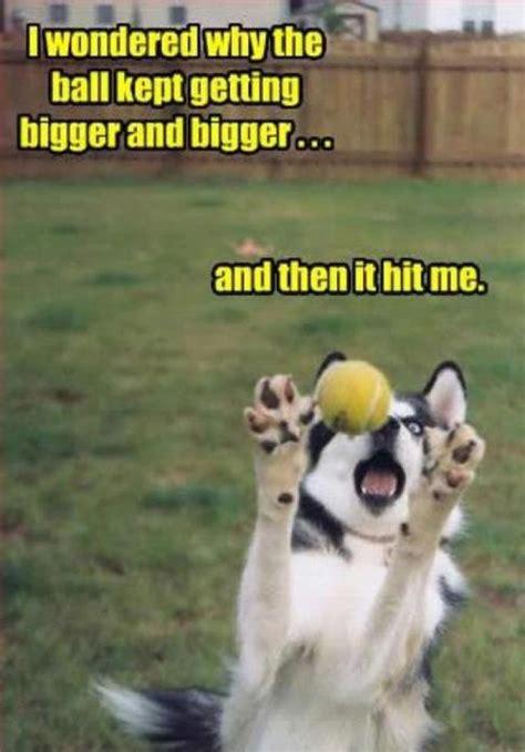 Best Dog Memes - top 44 funny dog memes funny dog dompict com