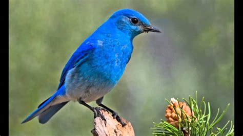 L Oiseau by Lys Gauty Quot L Oiseau Bleu Quot 1949