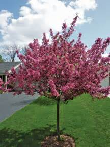 small spring flowering trees iowa gardener