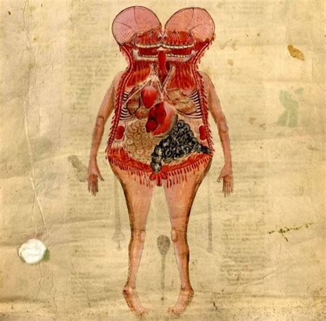 Human Cross Section by 79 Best Images About Vintage Pathology On