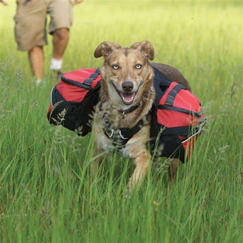 packs and dogs palisades backcountry pack by ruffwear currant