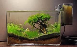Aquascape Ideas Tropical Plante Aquatique Jetez Vous 224 L Eau En 47 Photos