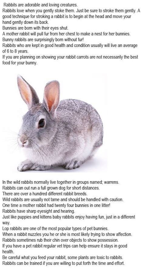 7 Facts On Bunny Rabbits facts about bunnies for http