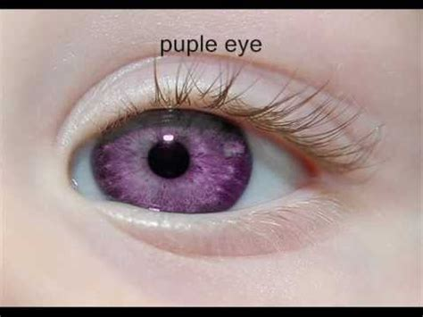 purple eye color eye color eye colors and on