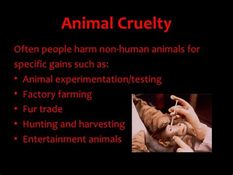 Animal Cruelty In Circuses Essay by Animal Cruelty Essay Animal Cruelty Thesis Statement Gt Gt Jan Animal Abuse In Circuses Essay