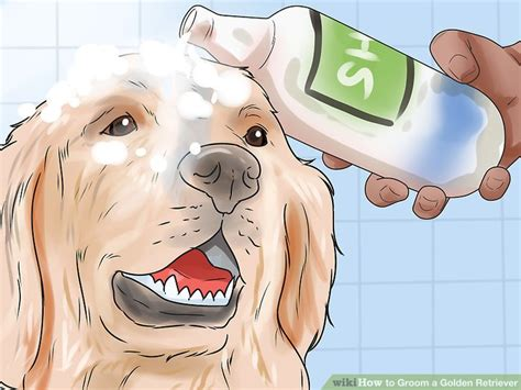 how to give a golden retriever a bath how to groom a golden retriever 14 steps with pictures