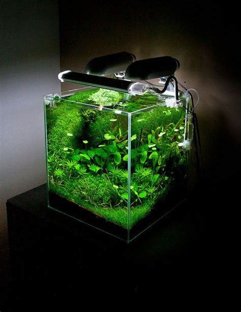 design aquarium nano so green beautiful planted nano tank