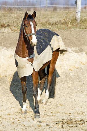 welche pferdedecke passt zu ihrem pferd