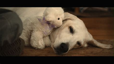 marley and me marley and me images marley me hd wallpaper and background photos 9187593