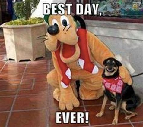 Best Dog Memes - best day ever what breed is it