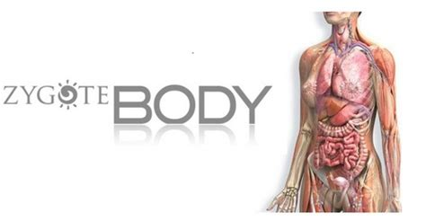 corpo umano anatomia organi interni atlante anatomia umana 3d