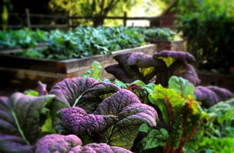Fall Plants For Vegetable Garden What To Plant In The Fall Vegetable Garden Joe Gardener 174