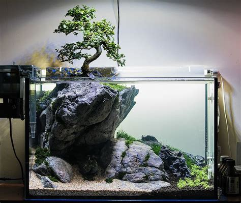 Best Plants For Tropical Aquarium - how hard would it be to keep a bonsai like this plantedtank