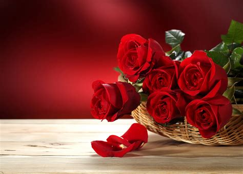 imagenes de rosas injertadas fondos de pantalla rosas rojo cesta de mimbre p 233 talo