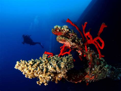dive in aqaba guided dives aqaba adventure diversaqaba adventure divers