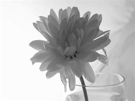 fiori in bianco e nero fiore in bianco e nero matteo varisco web design