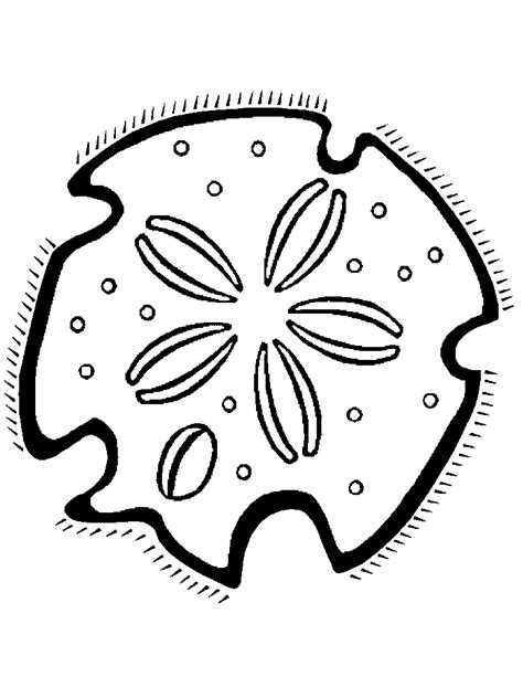 coloring page sand dollar sand dollar outline clipart best