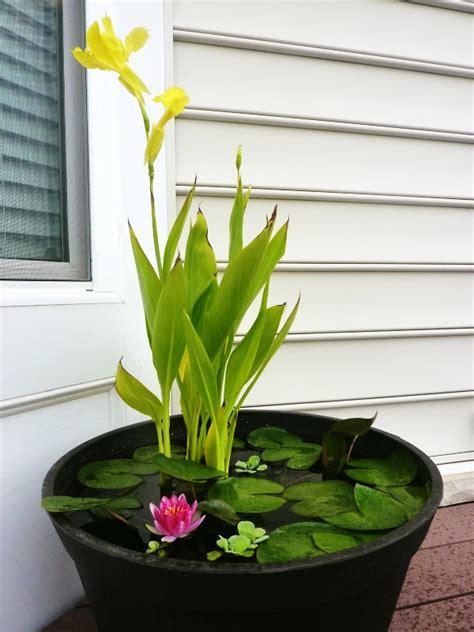 water container garden stuff i outdoor water gardens