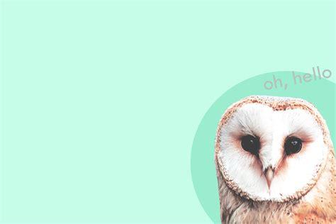 Squishy Yellow Owl schmoopy squishy
