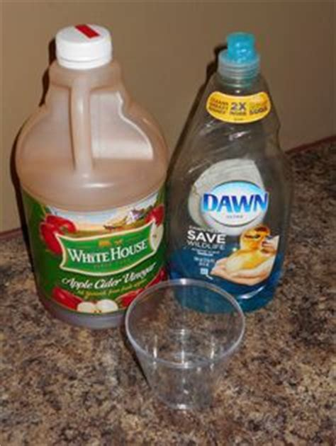 dish soap for dogs 1000 images about fleas on dish soap shoo and diy shoo
