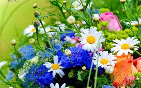 whatsapp wallpaper of flowers world s top 100 beautiful flowers images wallpaper photos