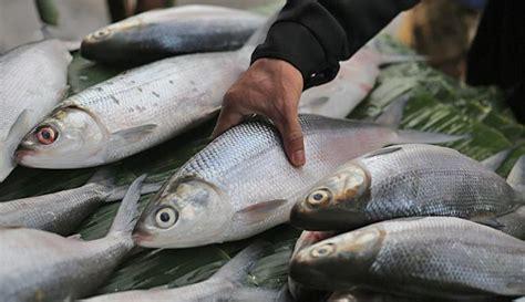manfaat  khasiat ikan bandeng  kesehatan