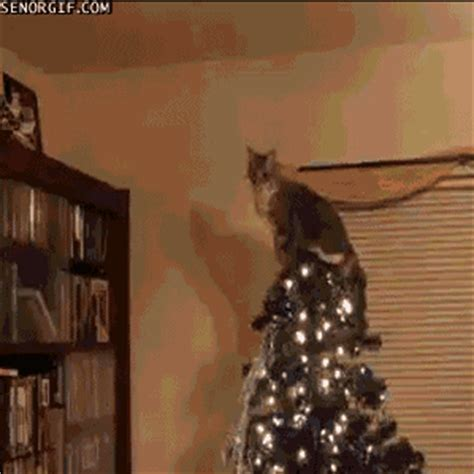 cats vs trees a gif collection