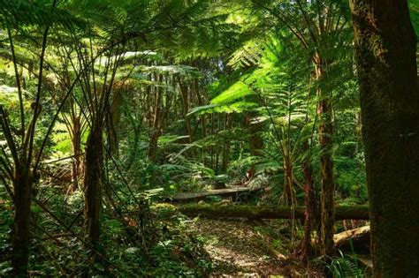 Plants That Live In The Forest Floor by Rainforest Facts For The Ultimate Guide