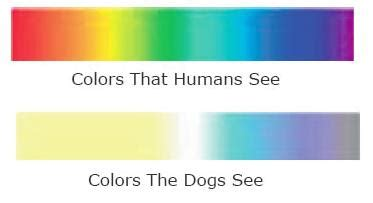 what color do dogs see